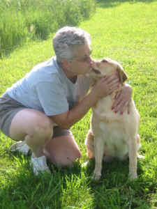 yellow labrador kissing owner